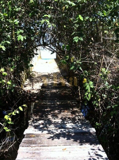 bridge path across mangrove